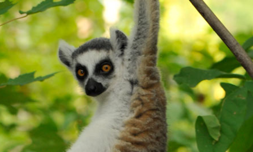 Leaping Lemurs! Summer Science (Gr 3-4)
