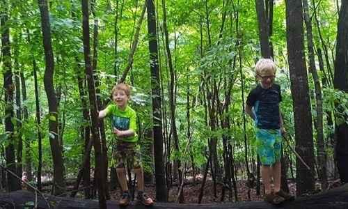 Raccoon Nature Camp